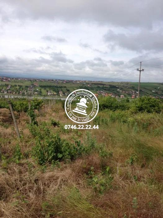 Teren pentru constructii case  de vanzare Iasi, Copou,