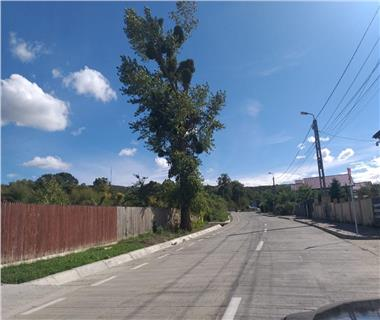 Teren pentru constructii case  de vanzare Iasi, Barnova,