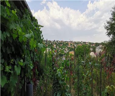 Vila  de vanzare  Sararie,